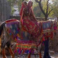 Child Bride Our Satya